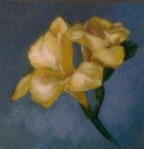 Freesia, 6 by 6 oil